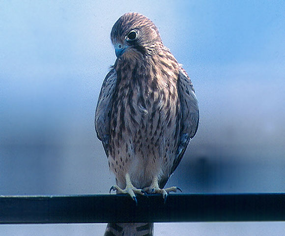 bird_10.jpg