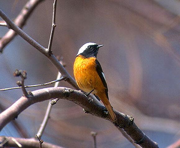 bird_30.jpg