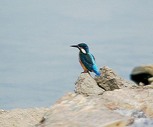 bird_35.jpg
