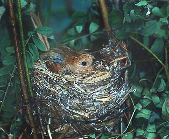 bird_38.jpg