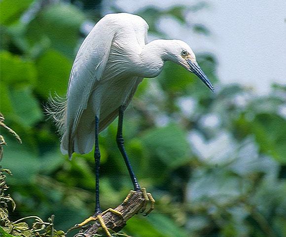 bird_44.jpg
