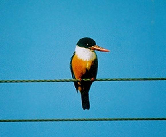 bird_58.jpg