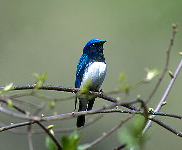 bird_60.jpg