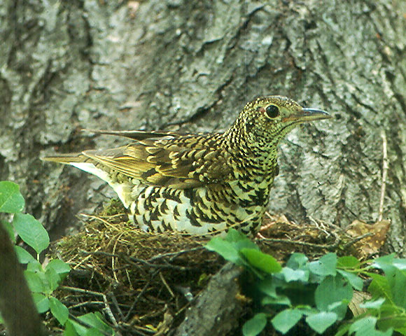 bird_61.jpg