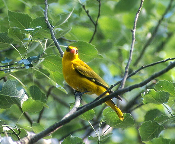 bird_9.jpg