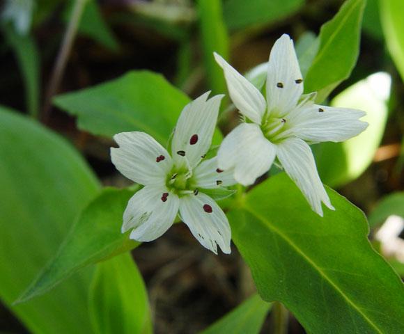 flower106.jpg