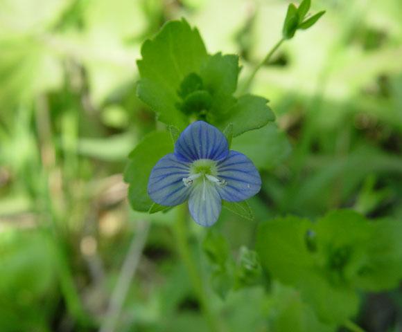 flower108.jpg