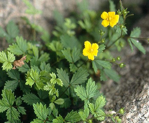 flower24.jpg