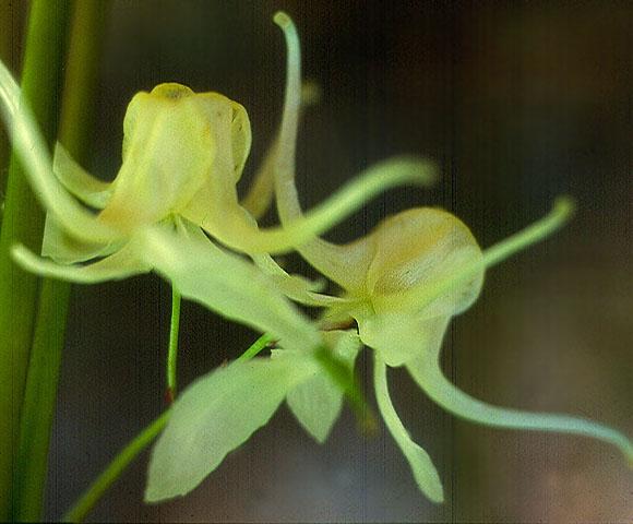 flower46.jpg
