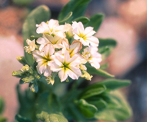 flower53.jpg