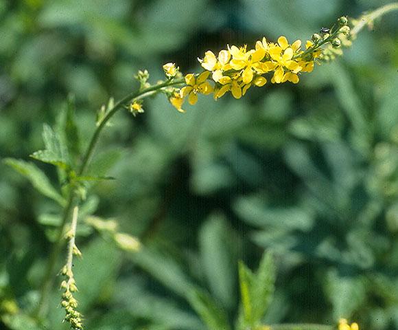 flower75.jpg