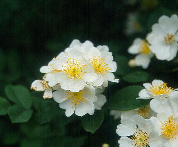 flower76.jpg