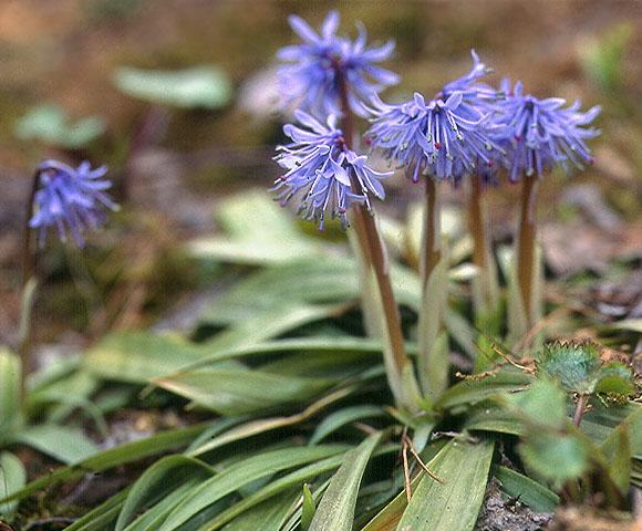 flower83.jpg