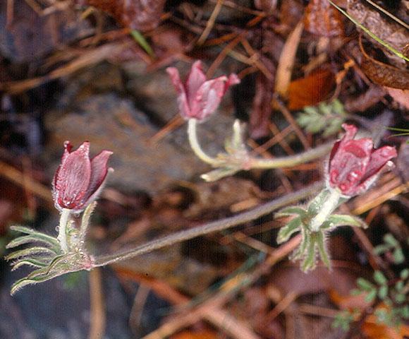 flower95.jpg